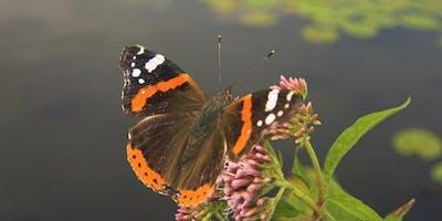 Dragonfly & Butterfly Safari at RSPB Strumpshaw Fen