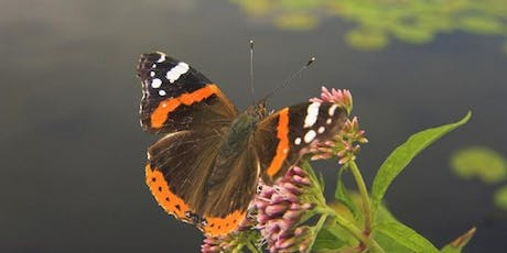 Dragonfly & Butterfly Safari at RSPB Strumpshaw Fen tickets