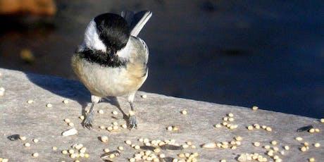 Birding in Peace tickets