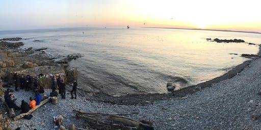 Survival Island 2019