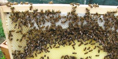 Beekeeping and Native Bee Health Workshop