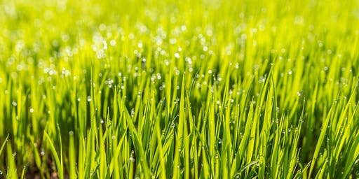 Refresh Your Lawn