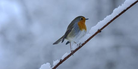 Winter Wildlife tickets
