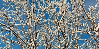 Happy Trees Thru Winter