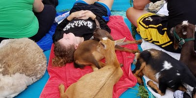 Guided Meditation with Goats (often includes babies)