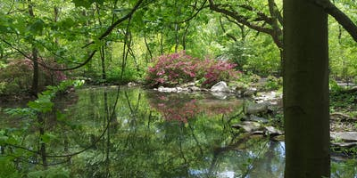 Secrets of Central Park Middle Kingdom Walking Tou