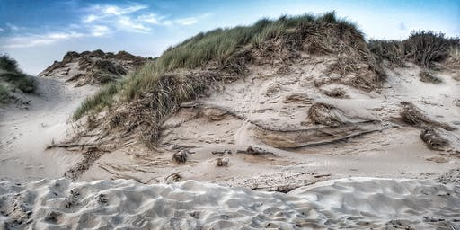 Squirrels and Sand - Formby Photography