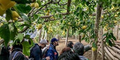 Il Sentiero dei Limoni