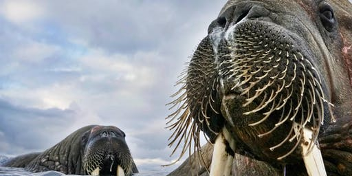 Wildlife Photographer of the Year - Big Ticket