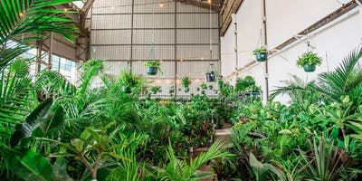 Huge Indoor Plant Warehouse Sale - Canberra