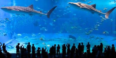 MCCS Okinawa Ocean Expo Park & Chura Umi Aquarium  Feb 2019