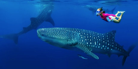 Whale Shark Tales tickets