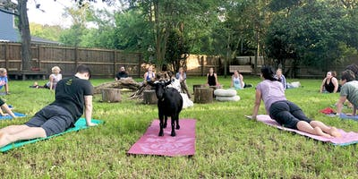 Independance Day Summerville Goat Yoga at Flowertown Charm Mini-Farm (4th of July)