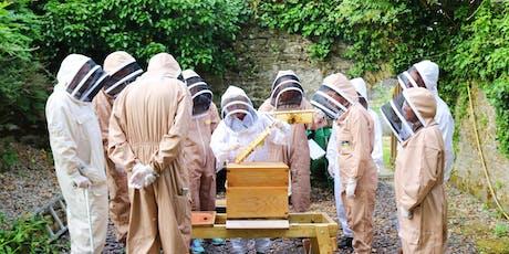 5 Week Beekeeping Course: Evening / Cwrs Cadw Gwenyn 5 Wythnos: Gyda'r Nos tickets