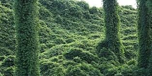 Minimize nuisance plants and pests