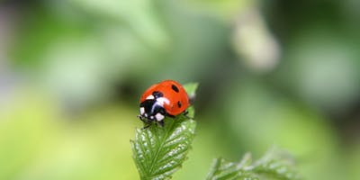 Encouraging beneficial insects