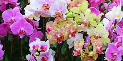 "Orchid Mania - A Mounting ""Make and Take"" Workshop"