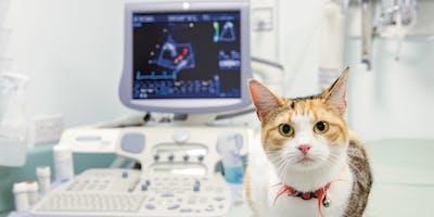 Echocardiography training