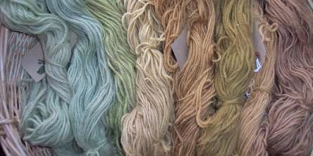 Natural dyeing using  native plants at Bradfield Woods (EWC2806)