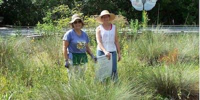 Wildflower Garden Work Day: Last Saturday of the Month