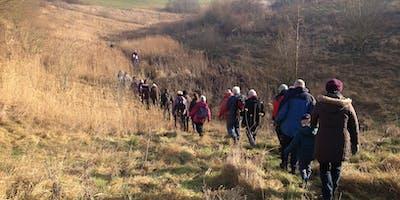 Woodland Walk - Bentley