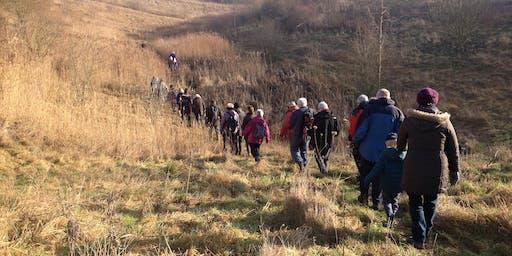 Woodland walk - New Park Springs