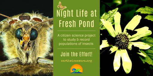 Night (Insect) Life at Fresh Pond
