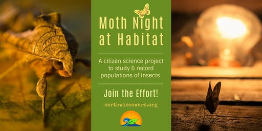Moth Night at Habitat