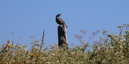 Bird Walk - Laguna Niguel Regional Park