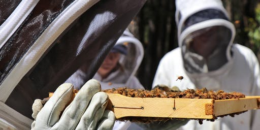 November - Introduction to Beekeeping at Vue Jindivick Eco B&B