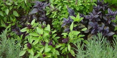 Grow Your Own Herbs and Spices