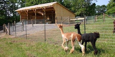 Setting Up Your Alpaca Farm
