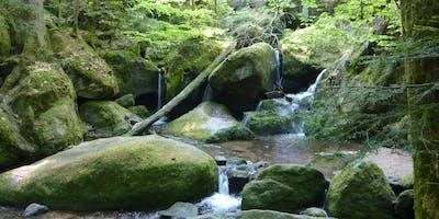 Single-Wanderung Geroldsauer Wasserfälle - Kreuzfelsen (30-50)
