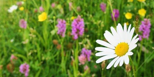 Get to know your Wildflowers Course / Cwrs Adnabod Blodau Gwylltion