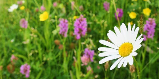 Get to know your Wildflowers Course / Cwrs Adnabod Blodau Gwylltion