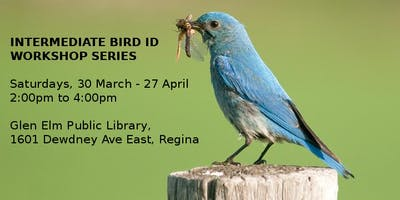 Regina - Intermediate Bird ID Workshop
