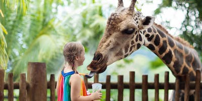 Animal Cognition at the Zoo: How the Partnership between Florida Tech and Brevard Zoo Is Furthering Science and Animal Wellness