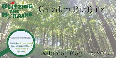 Blitzing the Moraine 2019! Caledon BioBlitz
