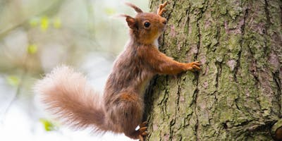 Squirrel Woodland Management