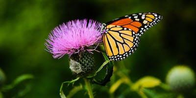 Bees, Butterflies & Beyond - Garden Workshop