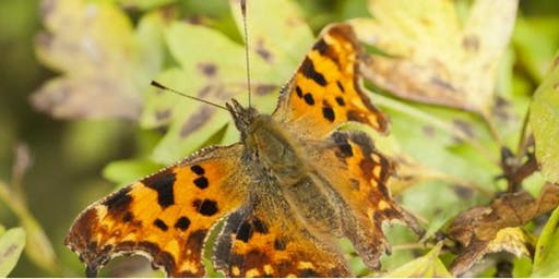 The Wonders of Wildlife ID Sessions: Moths and Butterflies