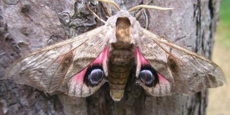 Winged Splendour: Butterfly and Moth 9 week course tickets