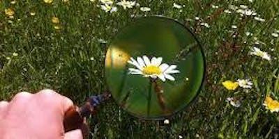 Bugs in your Backyard - Children\