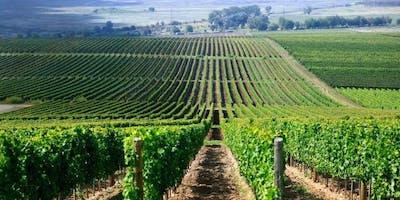 Wine Tasting: A Taste of Hungary