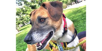 Canine Emotions: The New Frontier for Understanding Dogs
