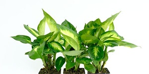Indoor Plant Classes