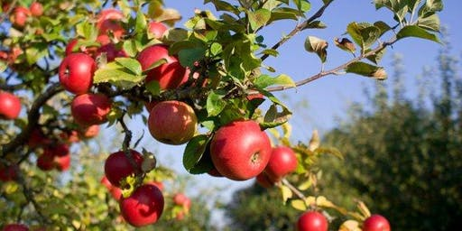 Operating an Organic Orchard