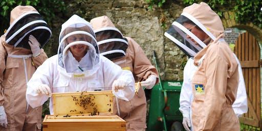 5 Week Beekeeping Course: Daytime / Cwrs Cadw Gwenyn 5 Wythnos: Dydd