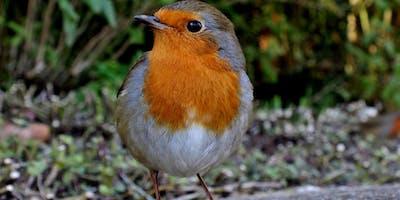 Birds of the Solar System Way - Brunswick