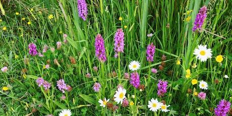 Wildflower Identification Course: Improvers / Cwrs Adnabod Blodau Gwylltion tickets